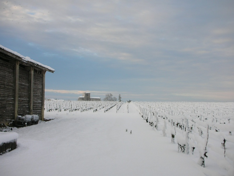 terroir-vine-snow-chateau-des-arras