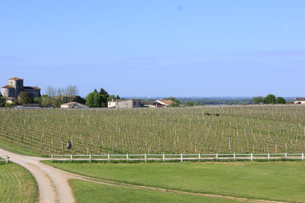 chateau-des-arras-vines-spring
