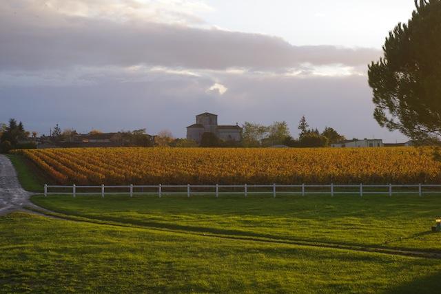 terroir-vines-fall-chateau-des-arras