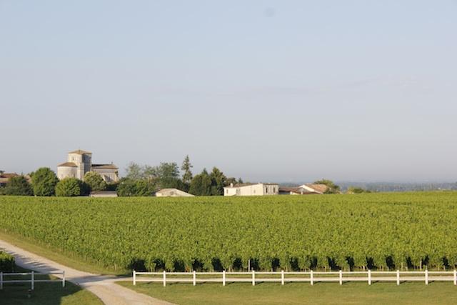 terroir-vines-summer-chateau-des-arras