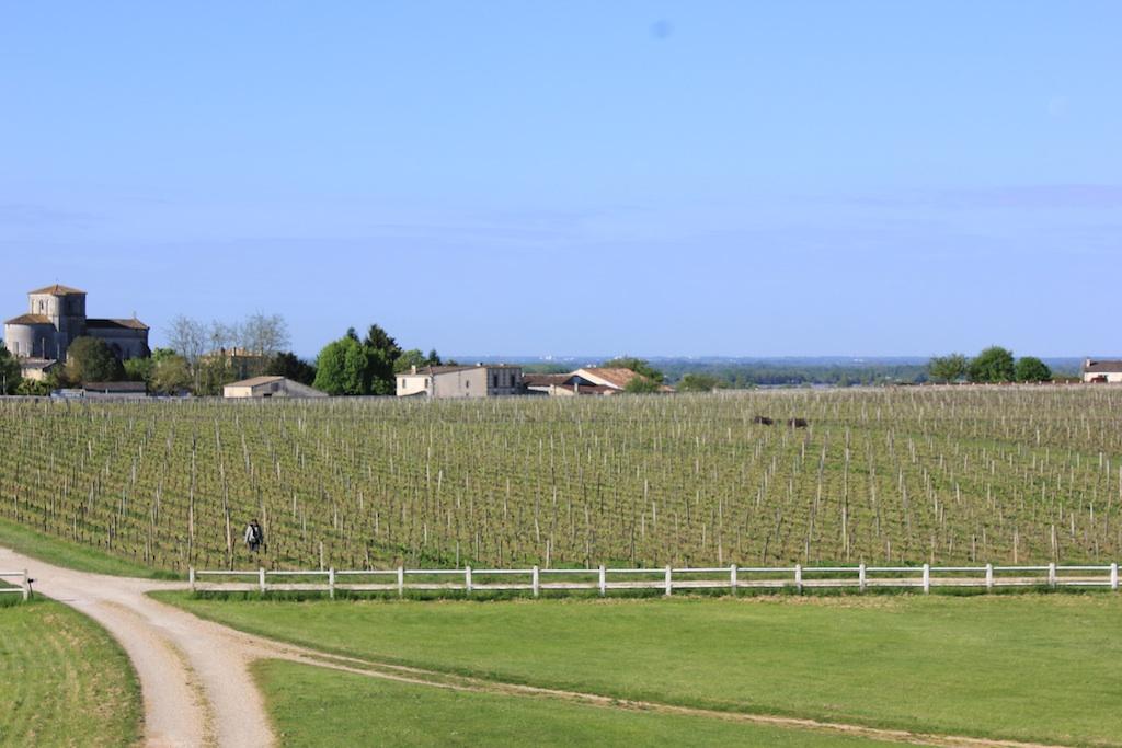 chateau-des-arras-vines-spring