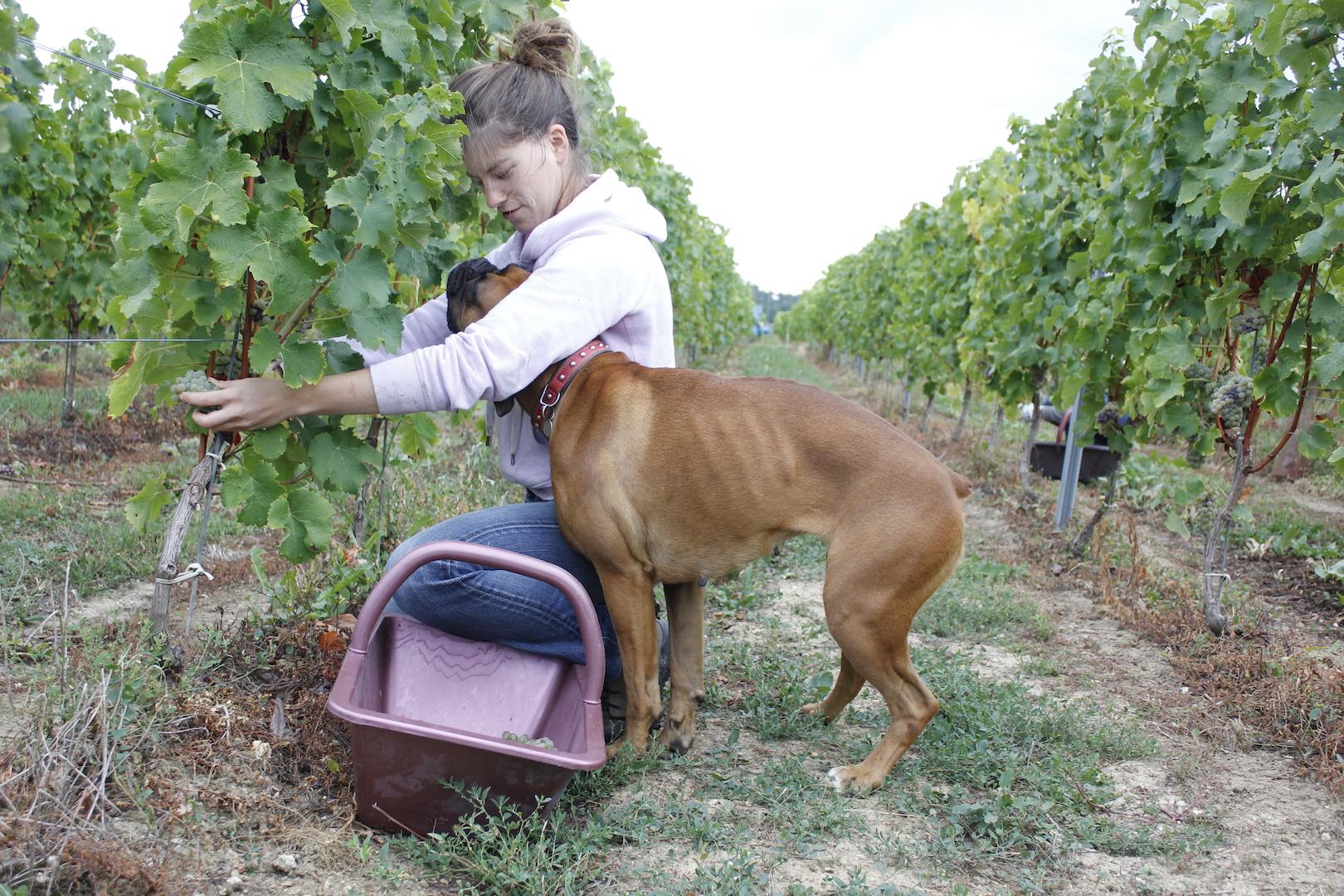 chateau-des-arras-hand-harvest-bordeaux-white-wine-gaïa