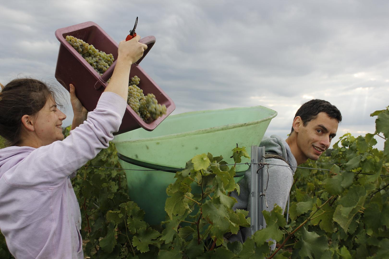 chateau-des-arras-hand-harvest-bordeaux-white-wine