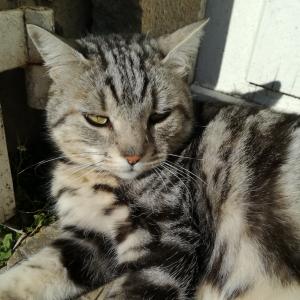 chateau-des-arras-chat