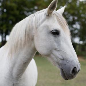 chateau-des-arras-cheval-andalouse