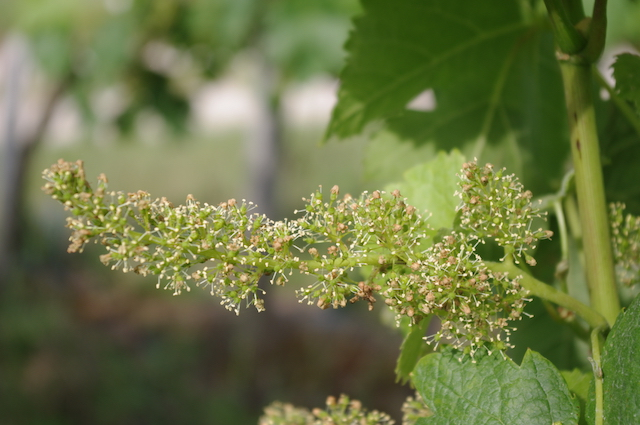 healthy-flower-vine-sustainable
