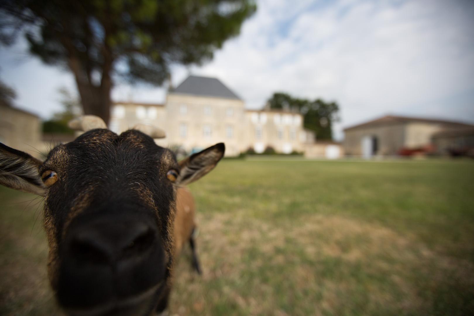 philosophy-chateau-des-arras-view-zoom-goat